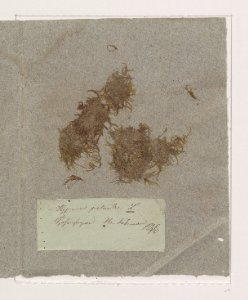 Herrenhäuser Herbarium